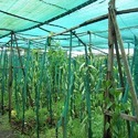 Hdpe Green Farm Shade Net, Length: 40 Meter