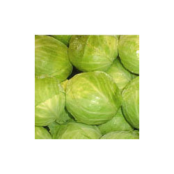 Veg Cabbage