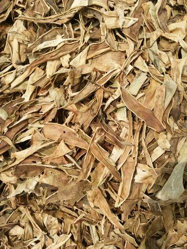 Aloe Vera Dry Leaves