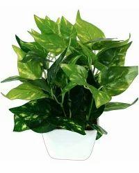 Hyperboles artificial green plant