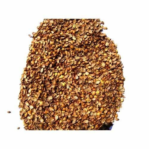 Indian Raw Spices - Split Coriander Manufacturer from Indore
