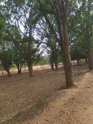 Agriculture%20Form%20House%20Sell, Size/ Area: 5 Acre