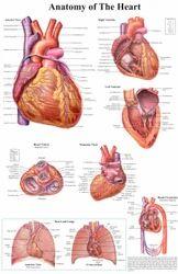 Anatomy Practical Study Chart