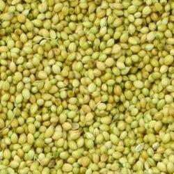 Green Coriander Seed, Packaging Size: 50g-1kg