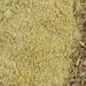 Fresh Mex Dhana Jira Powder