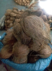 Tamilanad Husked Coconut