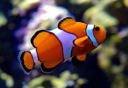 Aquarium Fish In Tiruchirappalli Latest Price Mandi Rates From