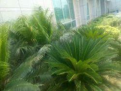 Exterior Garden Development Service