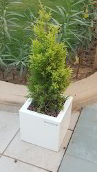 Offices Plastic Planters