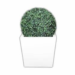 Topiary Ball Plants