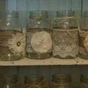 Transparent Decorative Glass Jar