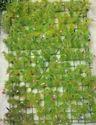 Hyperboles Artificial Wall Mats/ Tiles Vertical Gardening