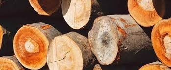 Industrial Timber Wood