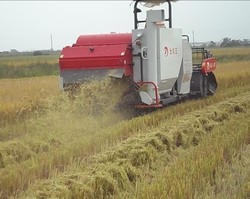Rice Cutting Machine