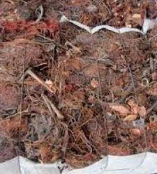 Copper Birch Scrap