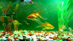 Fish aquarium price in jalandhar