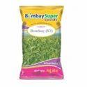 Wheat Seeds Bombay - 47