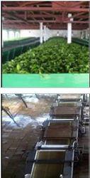 Tea Processing Service