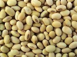 soya beans can fight cancer