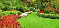 Garden Contractor Service