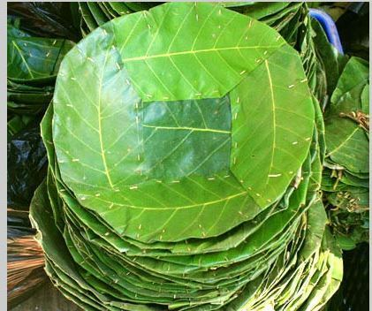 Relatively Leaf Plates & Siali Good Quality Loose Leaves Manufacturer from  FM88