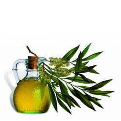 Tea Tree Oil - Soluble