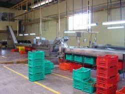 Gherkin Processing Plant