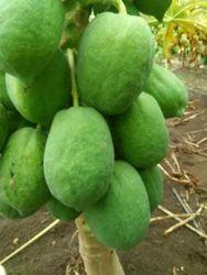 A Grade Green Papaya, Packaging Size: 5 Kg