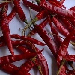 Super Hot Indian Teja Chilli