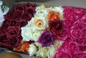 Hyperboles Artificial Rose Flowers