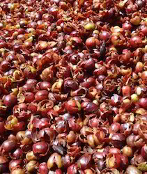Coffee Husk at Best Price in India211 x 250 jpeg 25kB