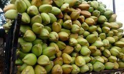 A Grade Green Tender Coconut