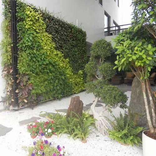Backyard Gardening Service In Banjara Hills, Hyderabad