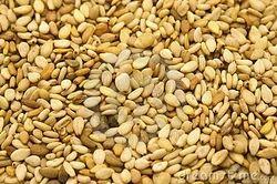 White Sesame Seed in Bengaluru - Latest Price & Mandi Rates from