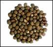 Kusum Seeds