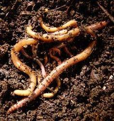 Plants Fertilizers Vermicompost
