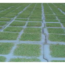 Concrete Grass Paver, Thickness: 80mm, for Landscaping