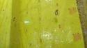 Yellow Sarees