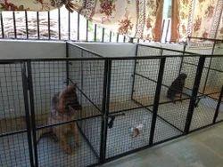 Dog Hostel