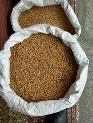 Ajit Wheat