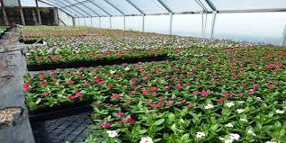 Agriculture Plant Nursery Services