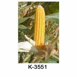 Hybrid Maize Hybrid Seeds