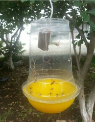 Honey Bees Sticky Trap