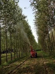 Sprayer for Mango Tree