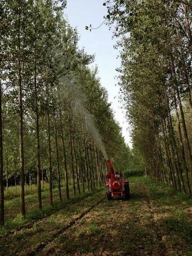 Sprayer For Mango Tree