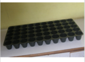 50 Cavity Seed Trays