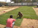 Lawn Makeing Service