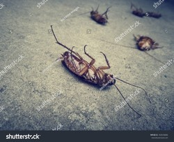 Cockroach And Bed Bugs Control Service