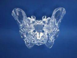 Transparent Pelvis Model