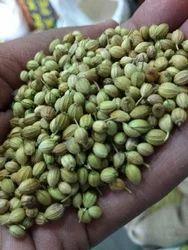 Dhaniya Seed